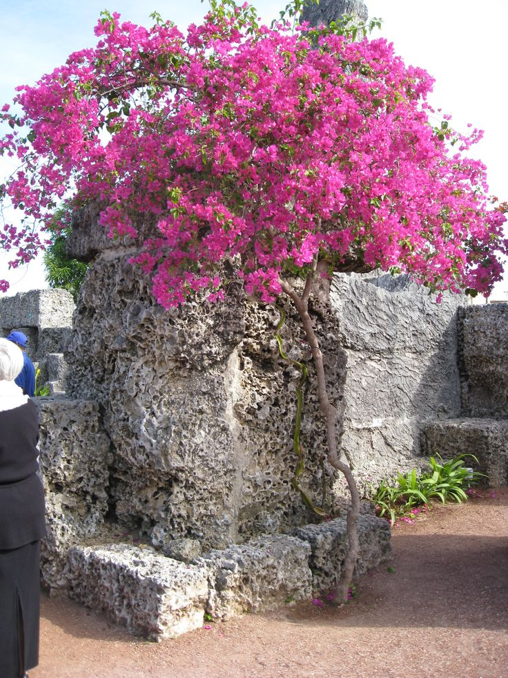 65 best south florida flowers and native plants images on pinterest