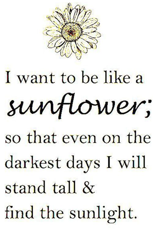 P O P Fall Ceiling Wallpaper 25 Best Ideas About Sunflower Quotes On Pinterest Happy