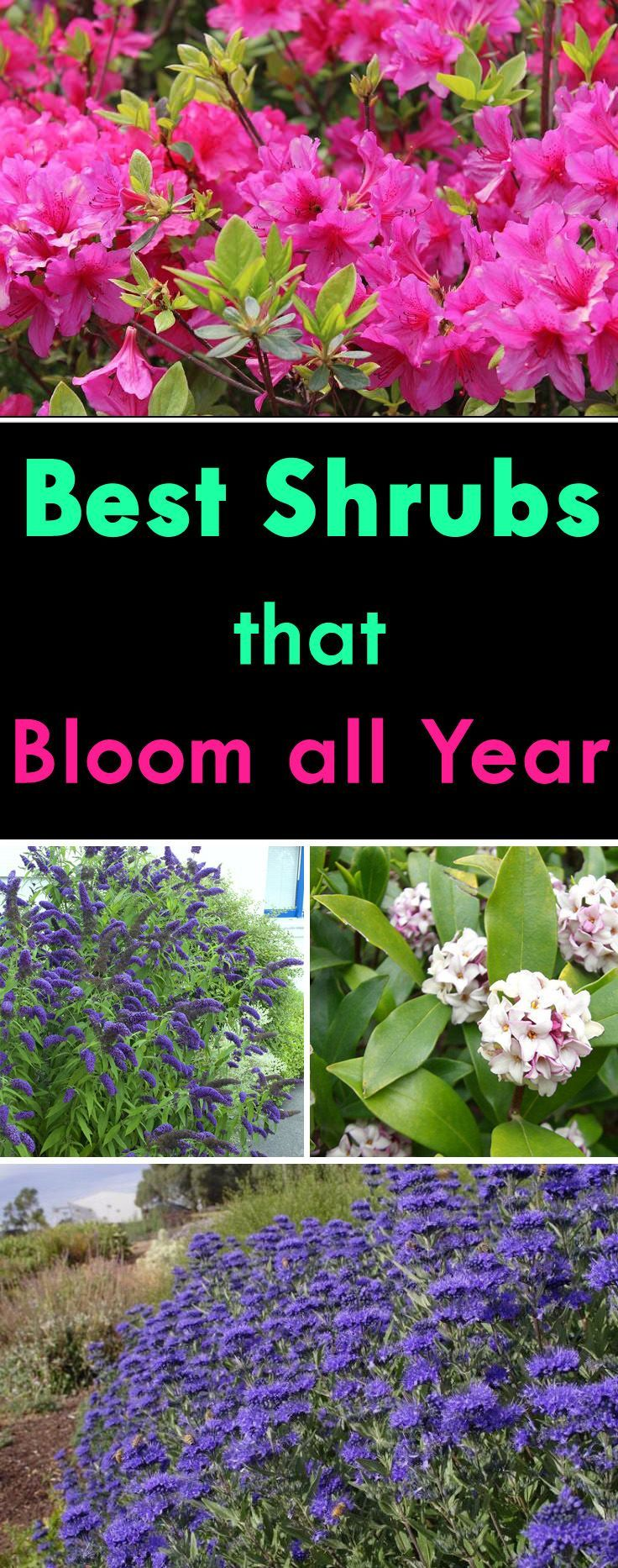 With careful planning and design you could have your shrubs flowering in your garden all