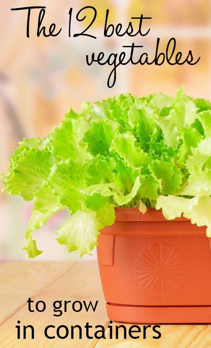 78 Best Ideas About Growing Vegetables On Pinterest | Compost