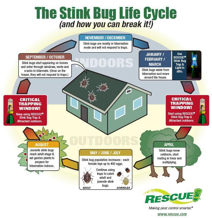 1000+ Ideas About Stink Bug Trap On Pinterest   Stink Bug