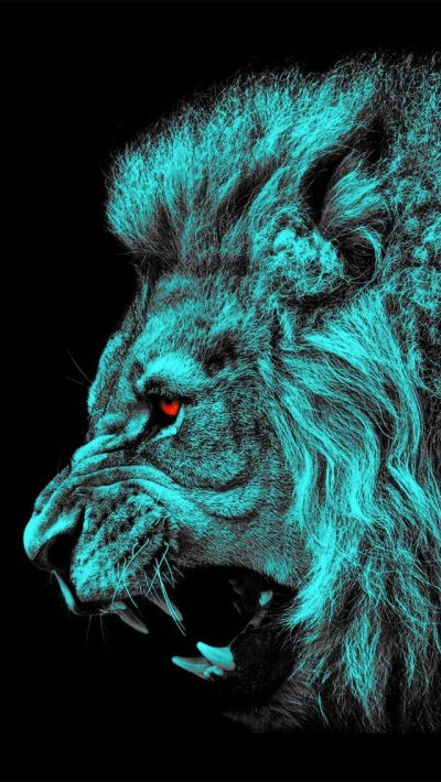 Black Lion With Blue Eyes Wallpaper