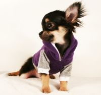 Best 25+ Chihuahua clothes ideas on Pinterest | Yorkie ...