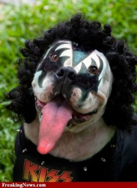 27 best images about Gene Simmons Costume on Pinterest ...