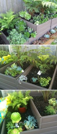 17 Best images about High Rise Patio Gardening on ...