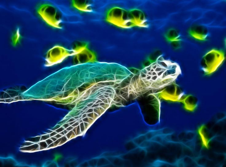 Cute Animated Wallpapers For Mobile Gif Download Sea Turtle Animated Wallpaper Desktopanimated