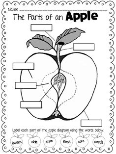 apple diagram for labeling