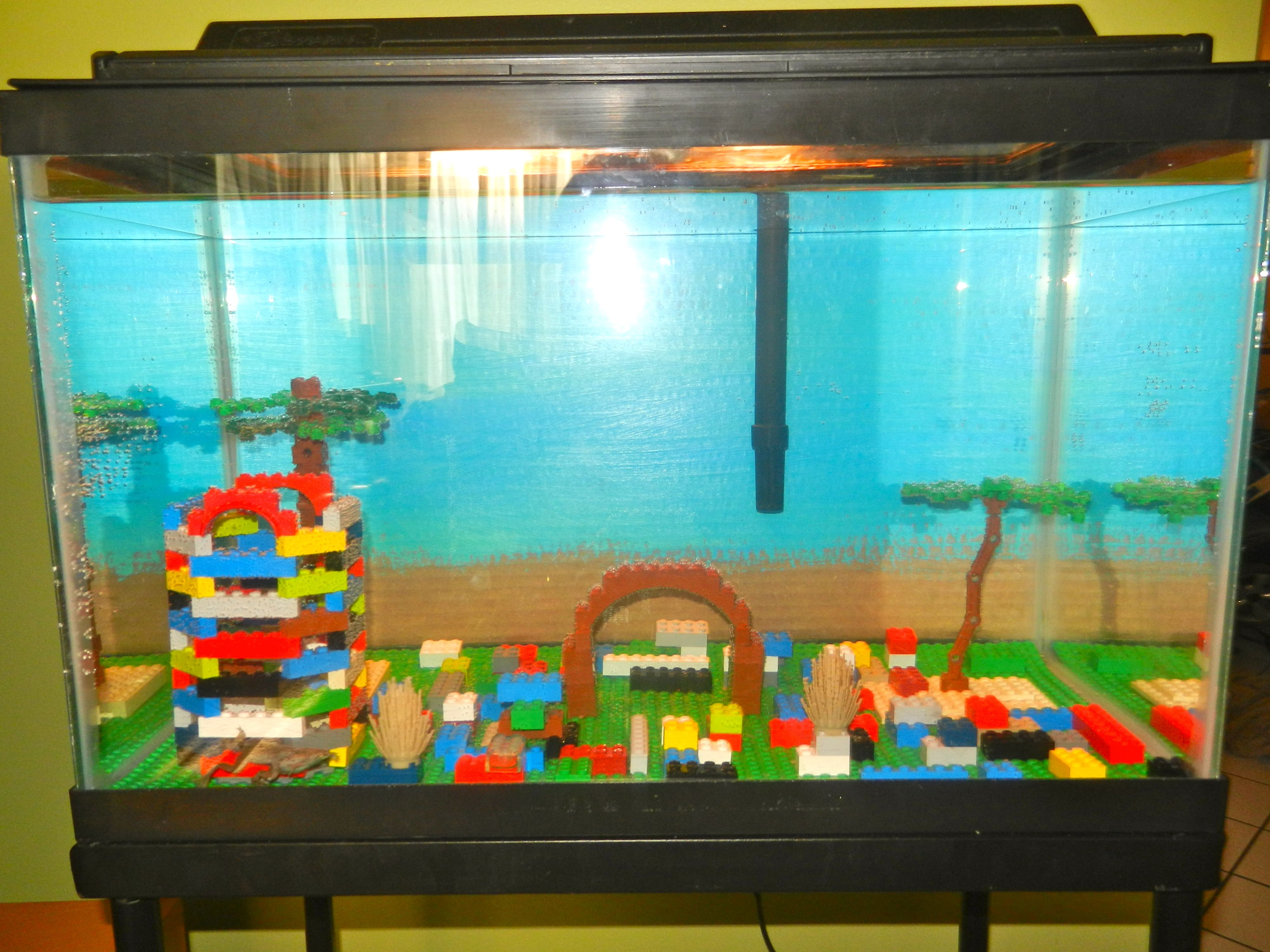 Betta Fish Decorating Ideas Elitflat