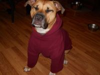 Dog Hoodie Mod | An, Big dogs and DIY and crafts