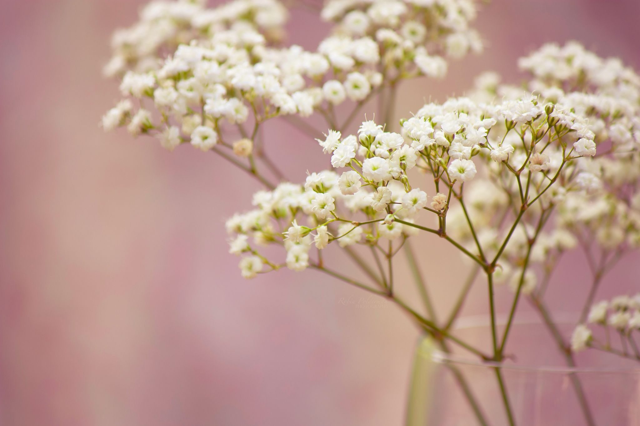 Gyp Wedding Bouquet Branch Baby's Breath Flowers White Small | Mics Pics