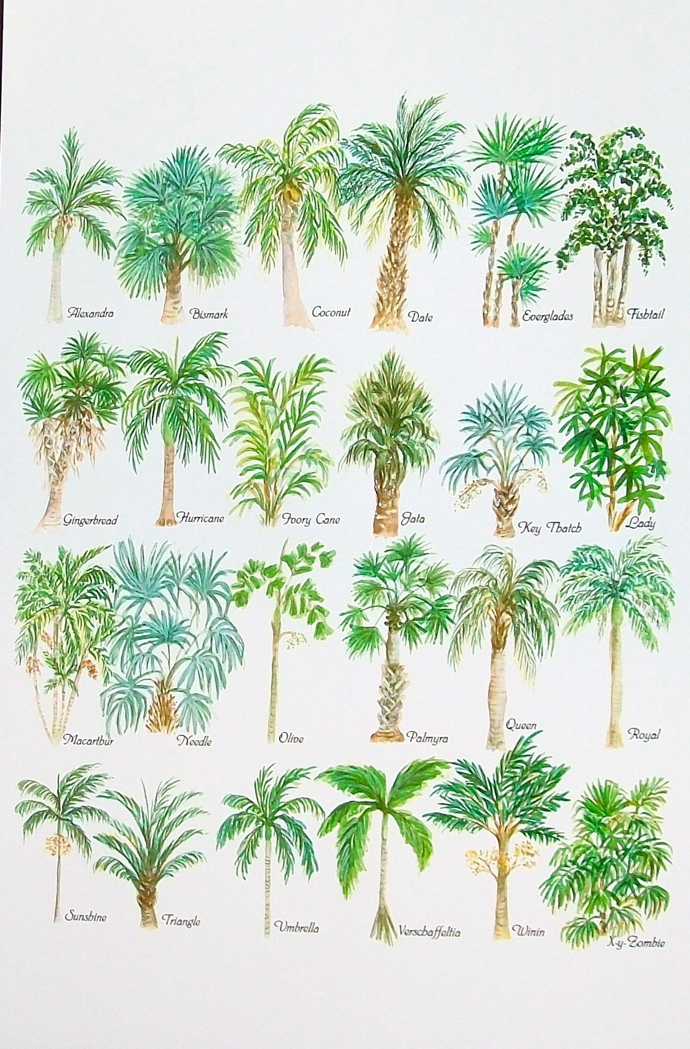 Tree Drawing With Watercolor Palm Tree Alphabet Watercolor Print Who Knew There Were So