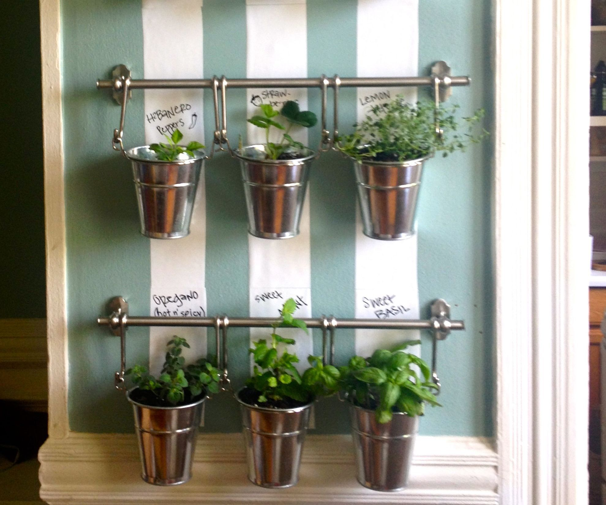 Herbs Pots Indoors Hanging Indoor Herb Garden Herb Wall Indoor Herbs And Herbs