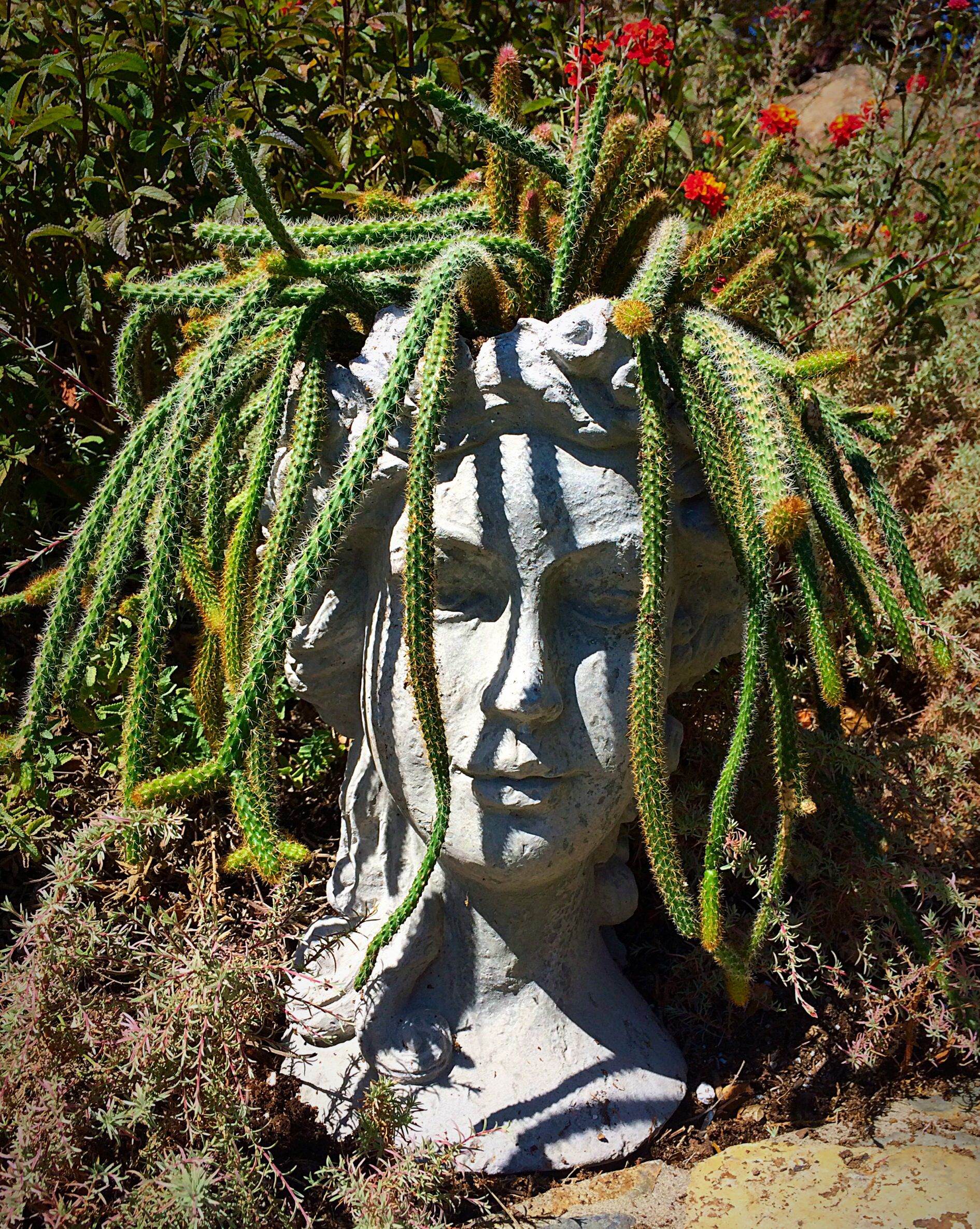 Planter Heads Medusa Head With Cactus Gardens Pinterest Best