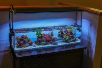 3 Foot Office Nano | REEF2REEF Saltwater and Reef Aquarium ...