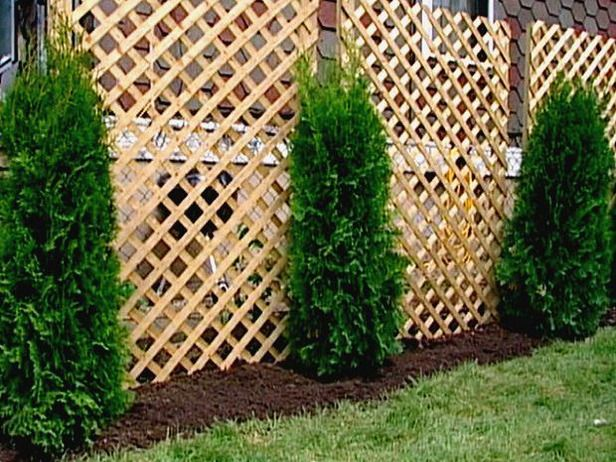 Planting For Privacy | Pinterest | Fence Design, Chain Links And