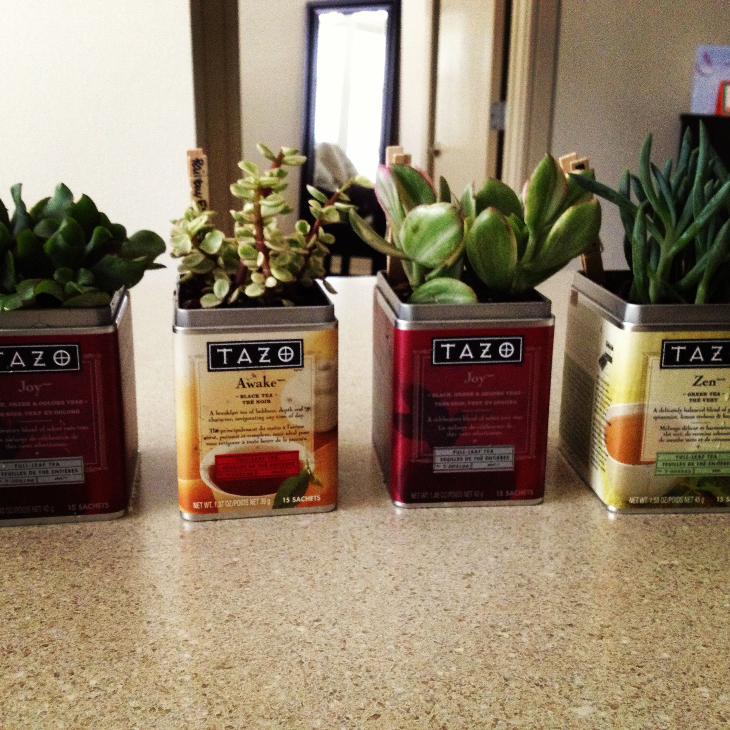 Tea Tins Succulents And Tazo Tea Tins Made By Me Pinterest