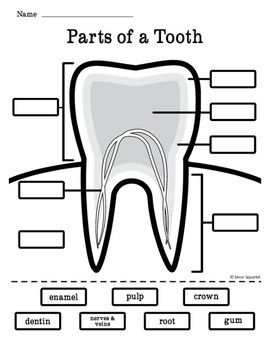 philips sonicare toothbrush diagram