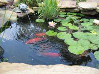 Pretty And Small Backyard Fish Pond Ideas At Decor ...