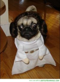 Dogs in Star Wars Costumes (Darth Vader, Yoda, Ewok)  29 ...