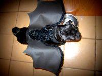 1 pet costume bat costume black wings dog cat costume ...