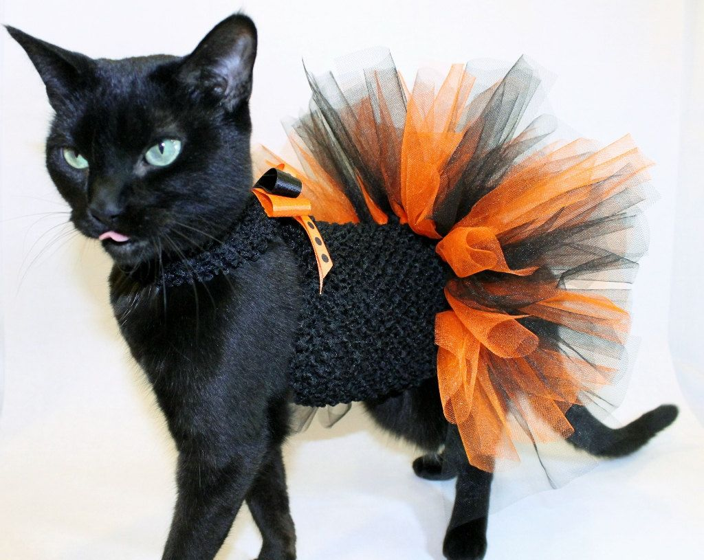 Cool Cat Supplies Coolcats Orange And Black Halloween Costume Tutu For Cats