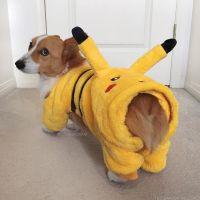 loki dressed as pokemon | All about the Corgis | Pinterest ...