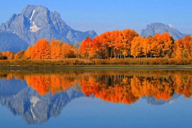 Fall Aspens Wallpaper Fall Colors In Grand Teton Great Collection Of Gorgeous