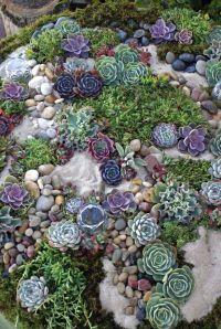 Succulent rock garden  | Garden | Pinterest | Cake table ...