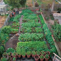 Productive garden on a small urban lot | vegetablegardener ...