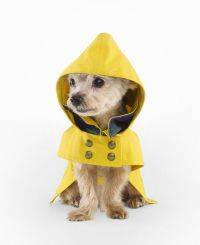 Ralph Lauren Dog Raincoat by drollgirl, via Flickr ...