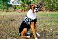 "Large dog sweater - ""Phuyu"" sweater in an Scandinavian ..."