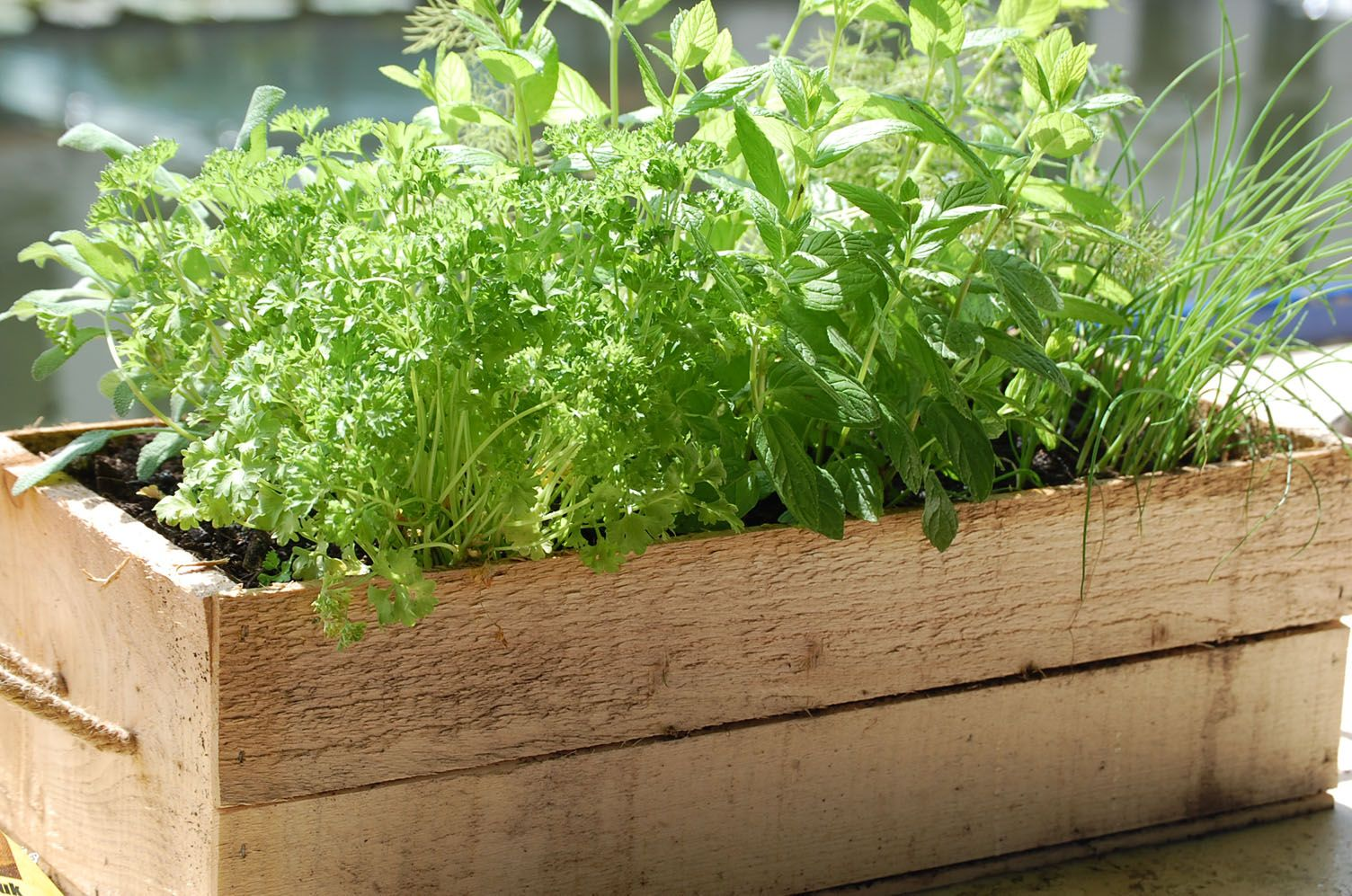 Herb Planter Pot 10 Herbs You Can Grow In Containers Herbs And Gardens