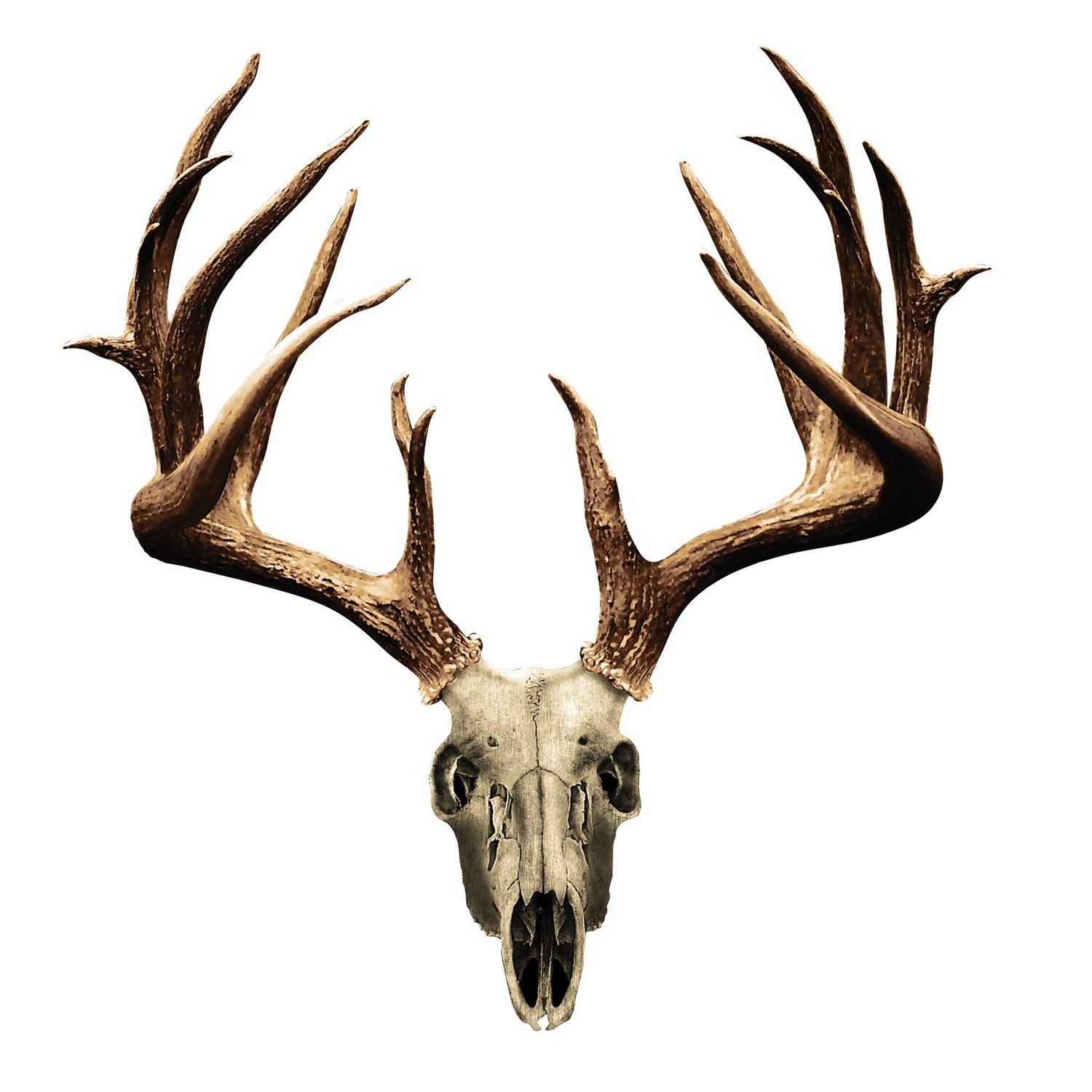 Fake Deer Skull And Antlers Deer 20skull 20drawing Deer Pics Pinterest Tattoo
