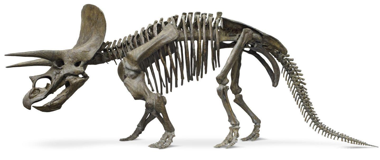 Skeleton Pattern Wallpaper Cute Triceratops Skeleton Google Search Prehistoric Animals