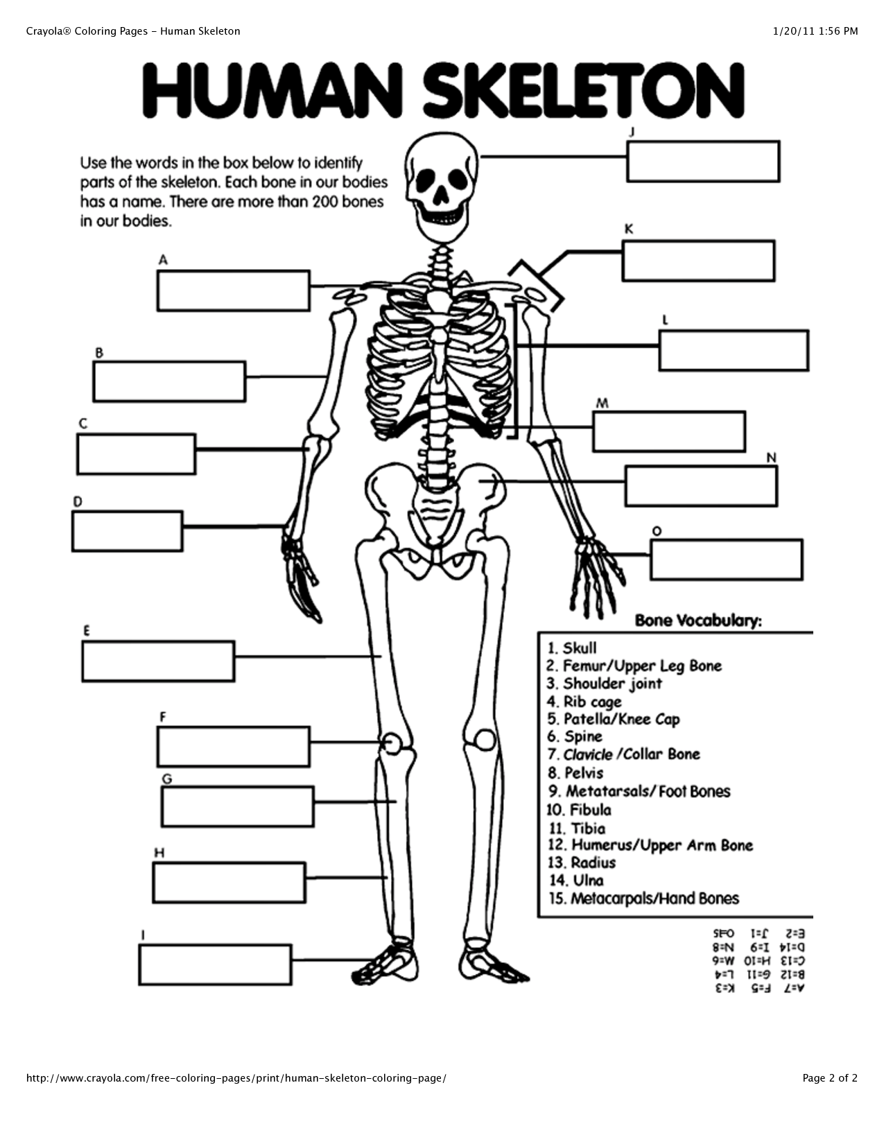 Coloring pages blood answer key - Skeleton Coloring Coloring Pages Blood Answer Key