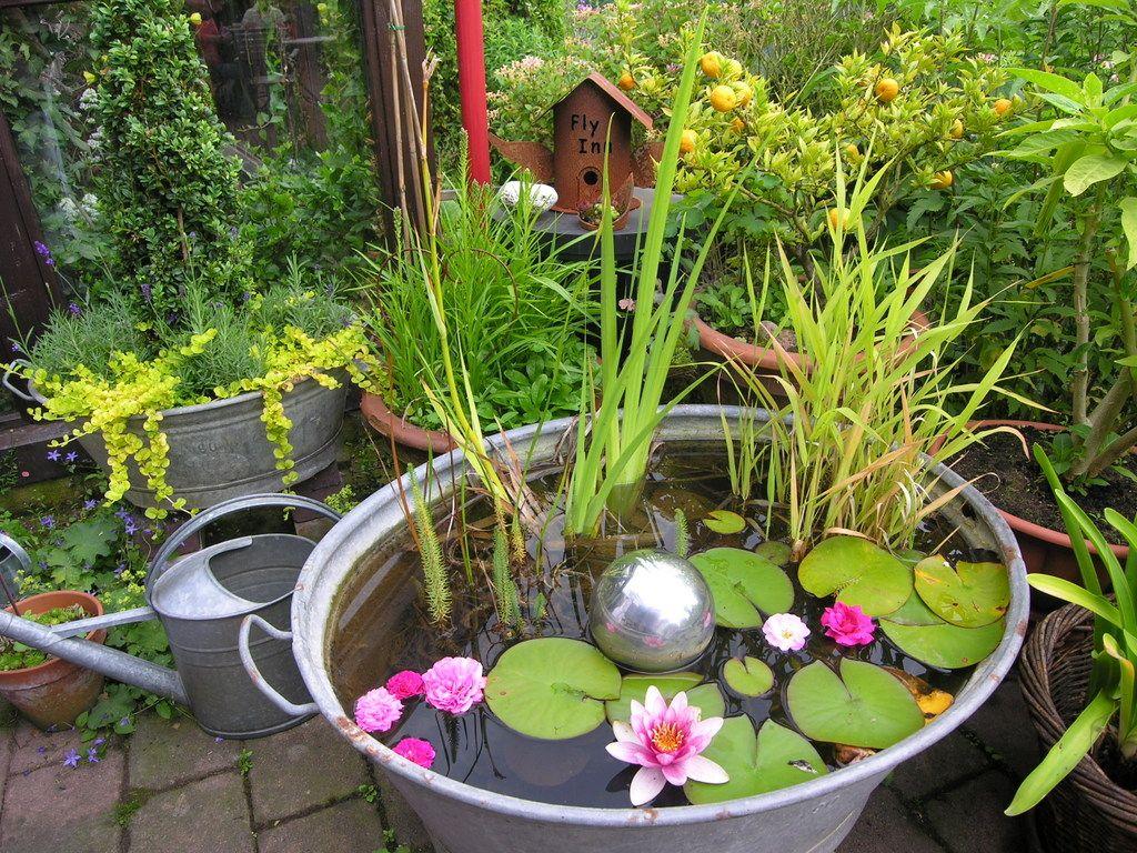 Miniteich Garten Mini Teich Bepflanzen Attraktiv Für Balkon Terrasse