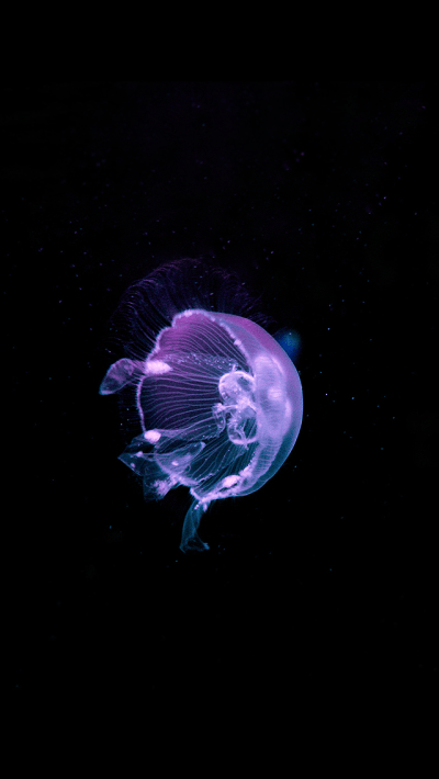 Jellyfish iPhone wallpaper background | ♥ iPhone Wallpaper ♥ | Pinterest | Wallpaper backgrounds ...