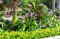 south florida landscaping ideas pictures | Florida ...