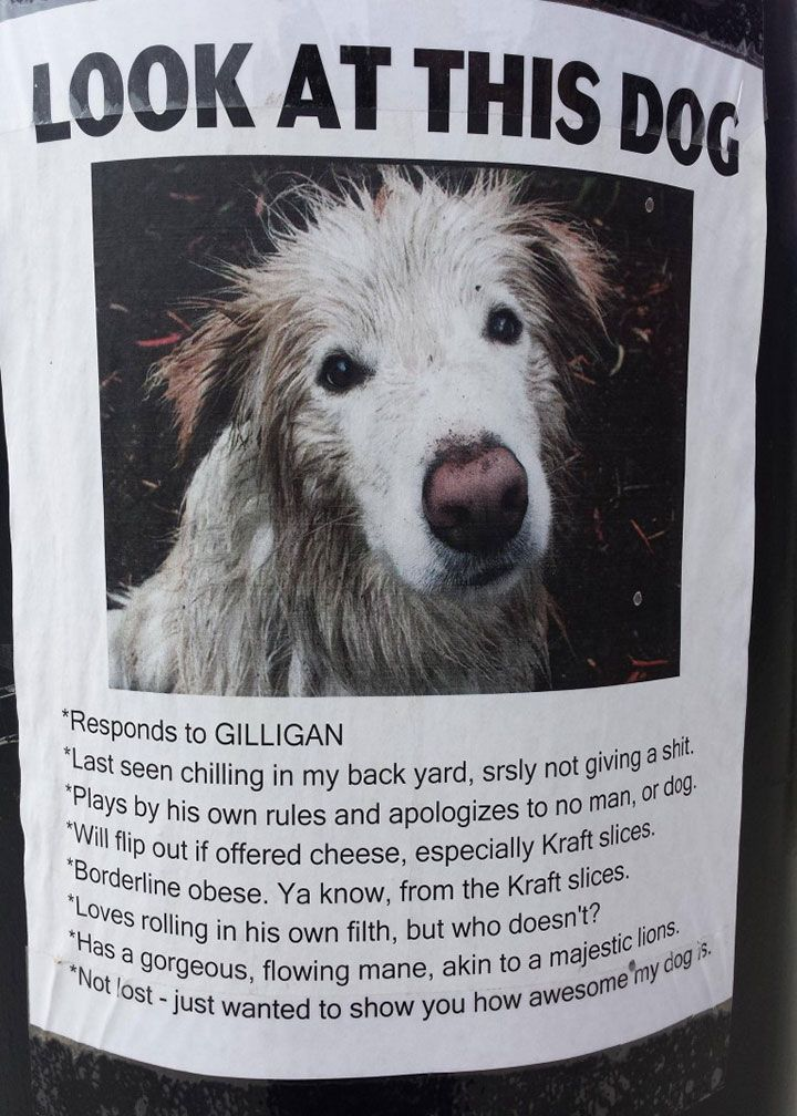 Lost Dog Poster Template Pets That Are Lost Together Do Not - 20 hilarious lost pet signs