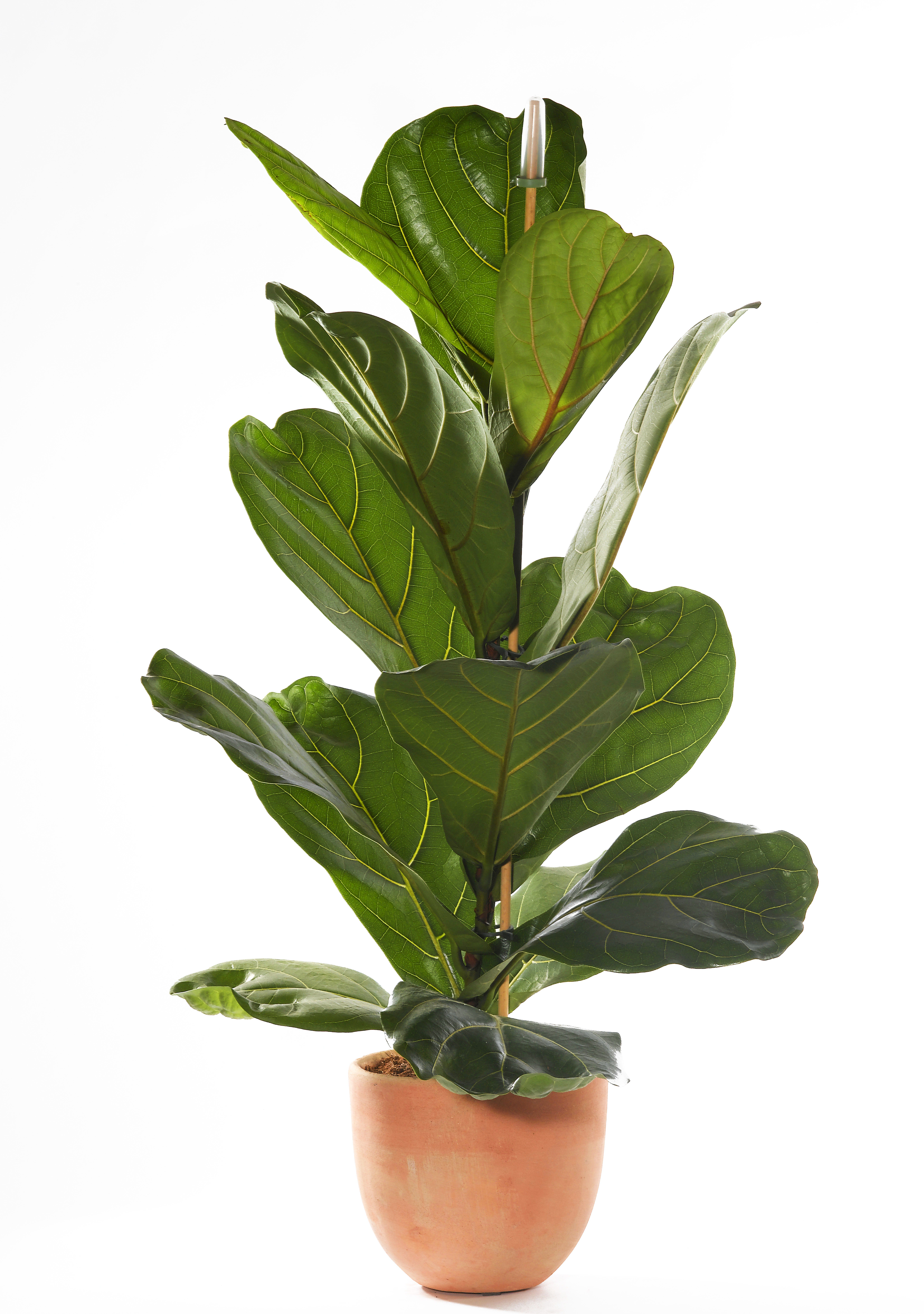 How To Plant Indoor Plants The Best Indoor House Plants And How To Buy Them Indoor