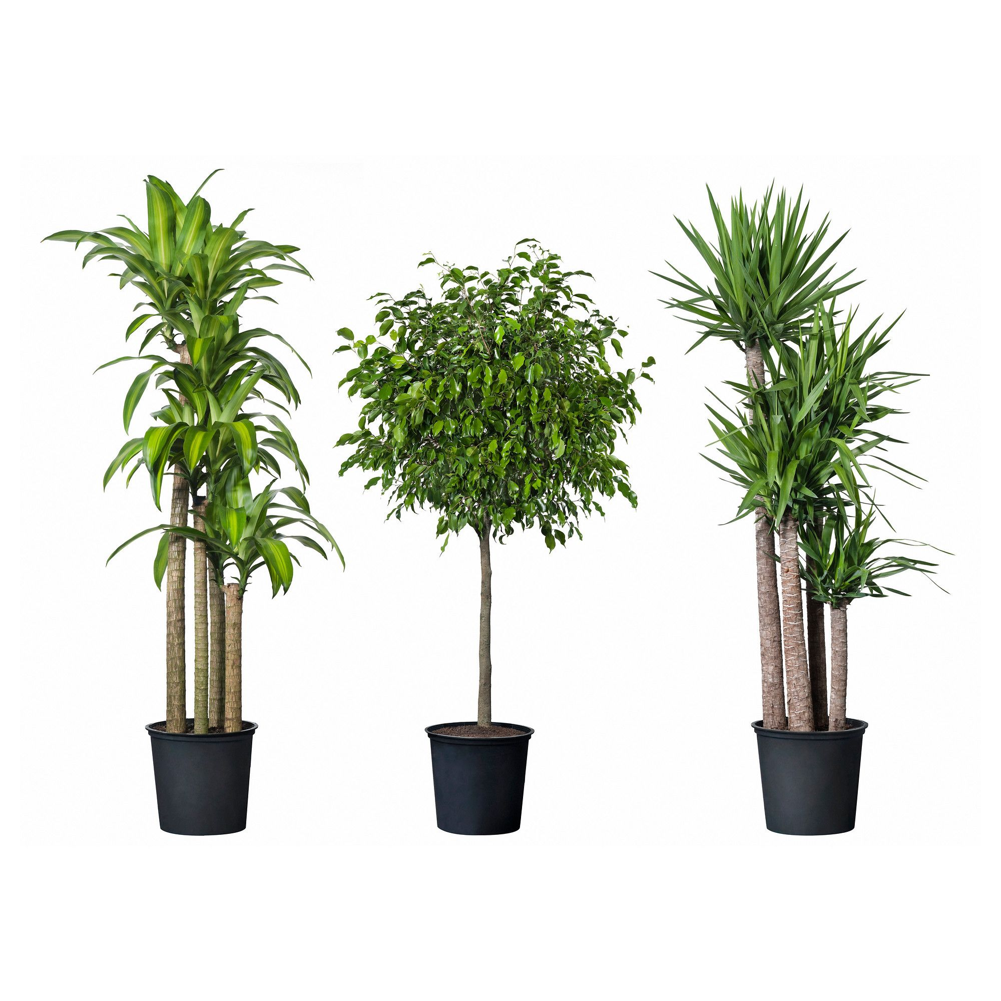 Ikea Planters Large Tropisk Potted Plant Tropical Plant Assorted Species