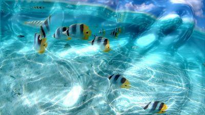 Free 3D Desktop Wallpaper Screensavers | More Downloads Related to Watery Desktop 3D Screensaver ...
