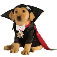 Vampire Dracula Dog Costume - Dog Costumes | dog stuff ...