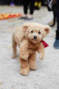 The 40+ Best Dog Costumes EVER | Bear costume, Button eyes ...