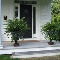 Urns - simple & classic - fern & ivy. Container garden ...