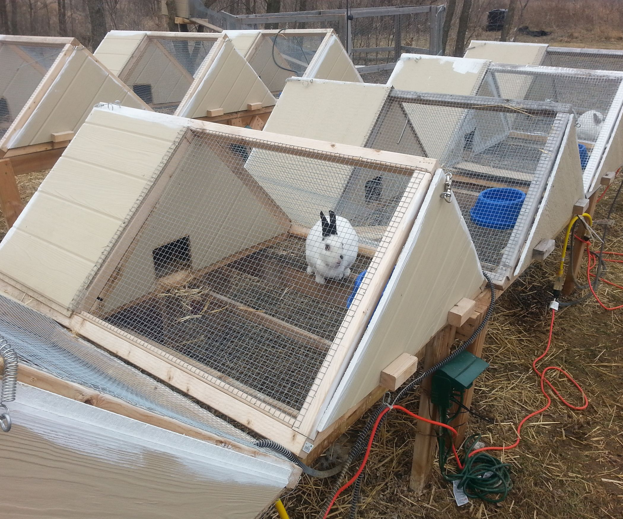 Diy Cage For Rabbit Super Great A Frame Rabbit Hutch Predator Rabbit And
