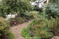 California native plant front yard garden in urban drought ...