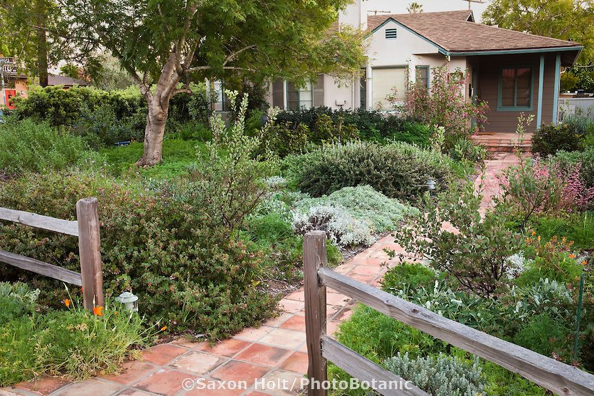california bungalow drought resistant garden entering front yard - drought tolerant garden designs