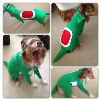 Yoshi costume for dog.