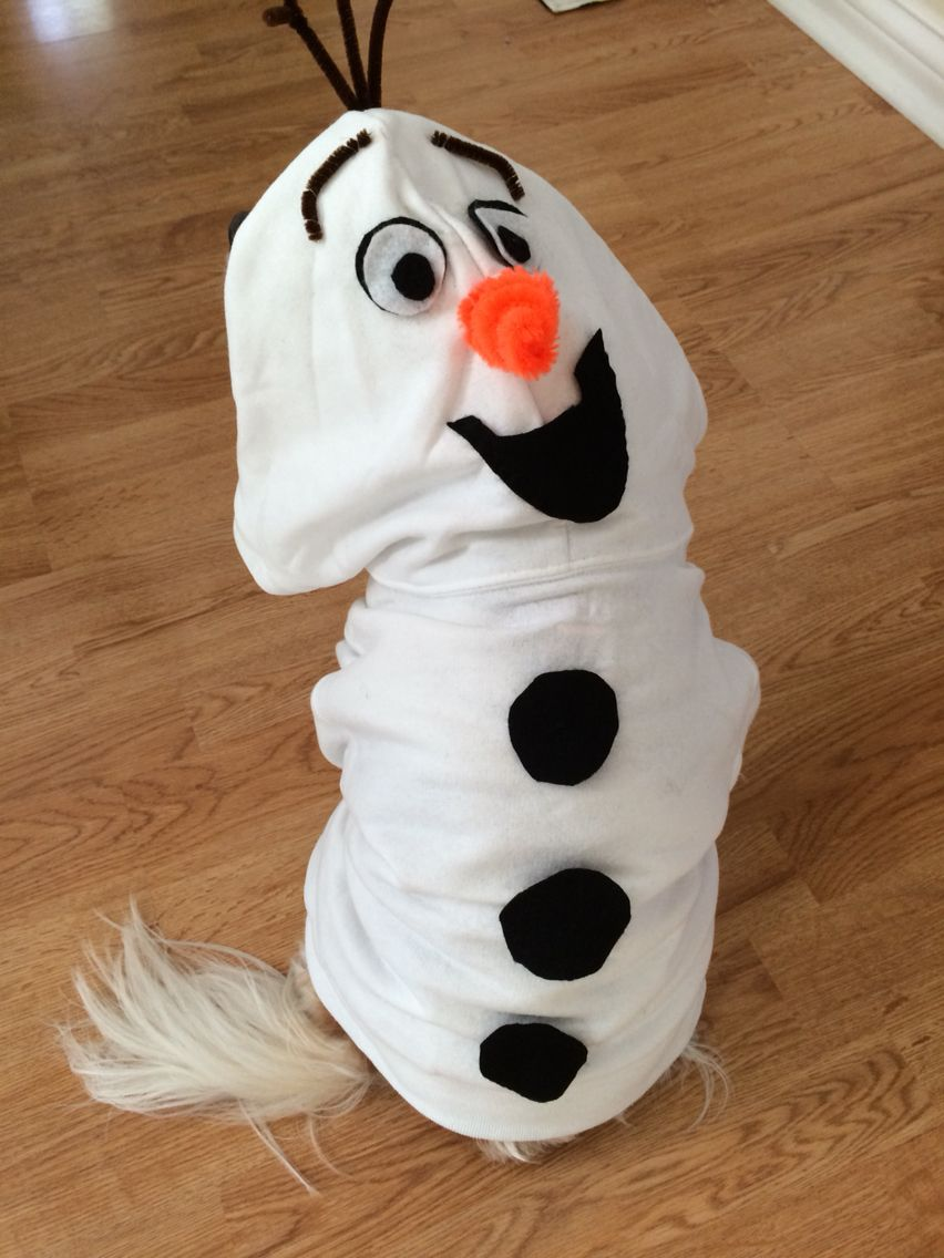 Easy Olaf costume for your dog. All you need is a kids